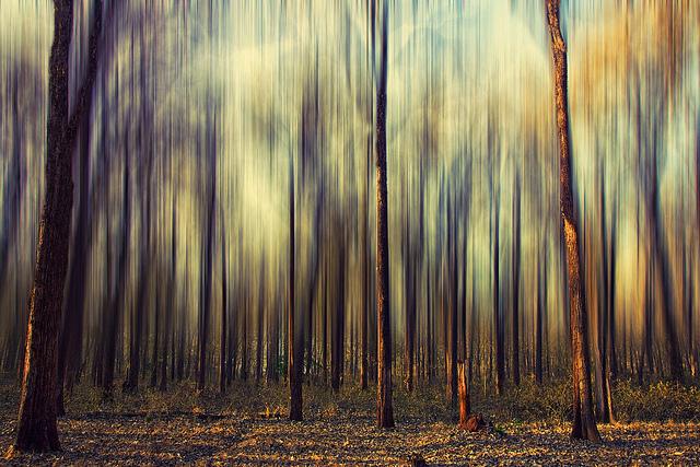 árvores desfocadas