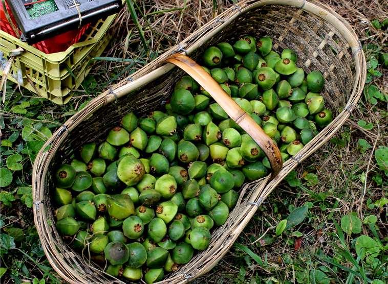 Cesta de vime preenchida com cambucis, fruta verde em formato de disco