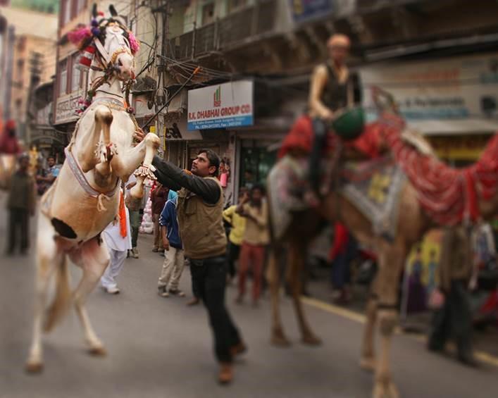 Indiano tenta domar cavalo em uma rua movimentada. Ao lado, homem monta em um camelo