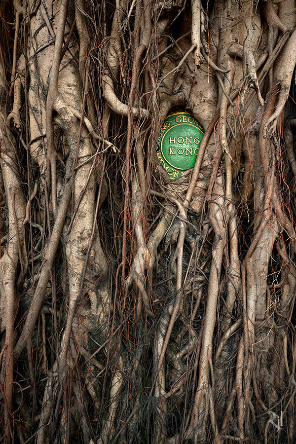 raiz de árvore cobrindo selo escrito hong kong