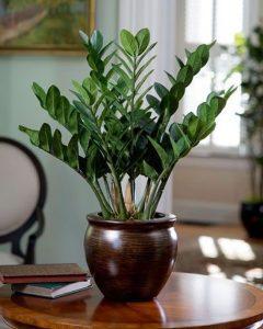 escolher-plantas-plantas-para-apartamento