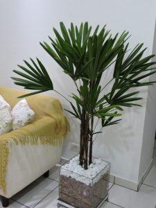 melhores-plantas-para-apartamento