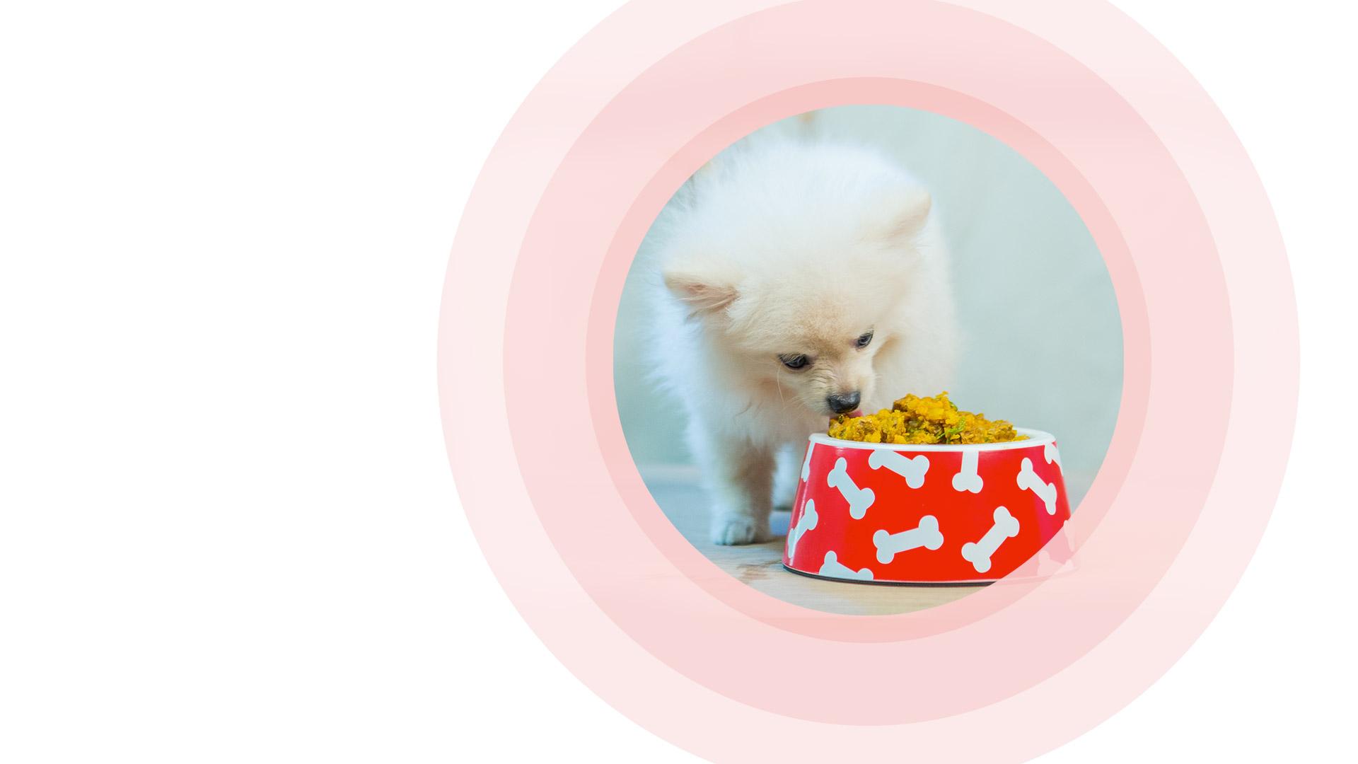 Alimentação natural boa pra cachorro: receitas para seu pet